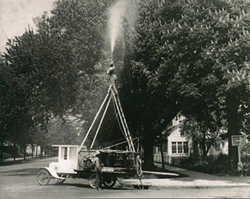 workers spraying trees
