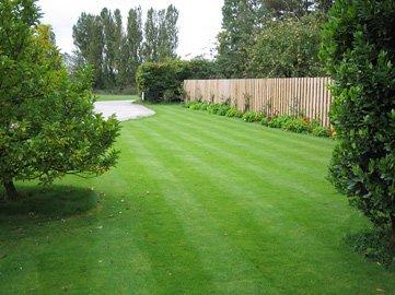 beautiful manicured lawn