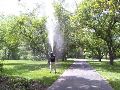 trees being sprayed
